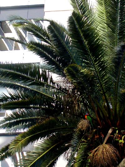 Jungle II Jungle: click for previous image
