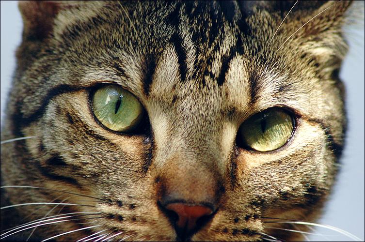 Apollo: click for previous image