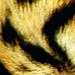Furry Look