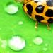 Edgy Ladybug #2