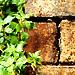 Planted Walls: Splattering Crack
