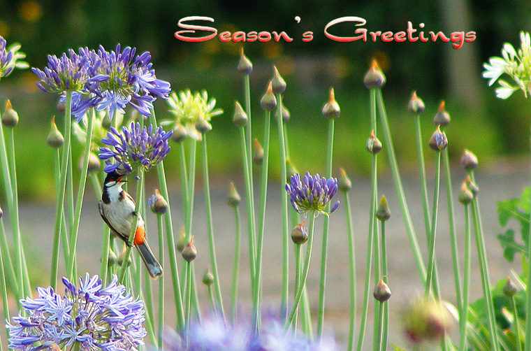 Season's Greeting 2004