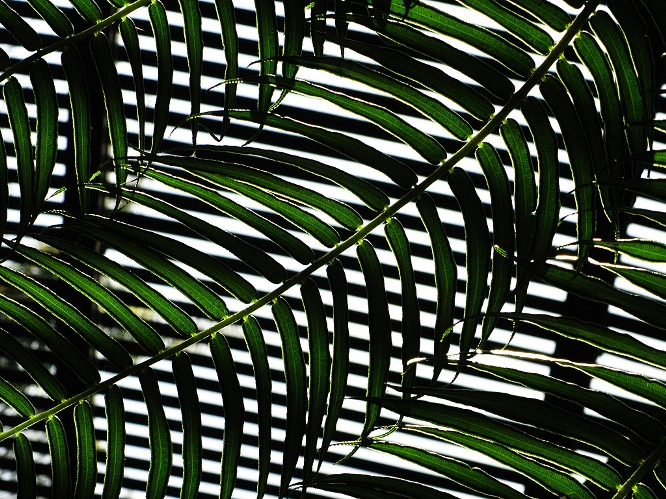 Fern Stripes: Weaving: click for previous image