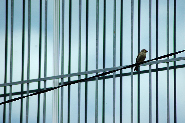 Bird on a Wire: click for previous image