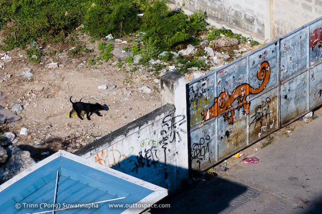 Gate Keepers – a stray dog on an empty land at Chong Nonsi