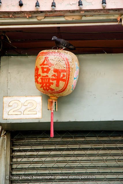 Light Stalker – a pigeon on a Chinese lamp in Phra Nakorn