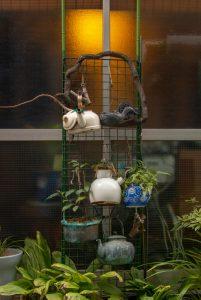 Teapot plants
